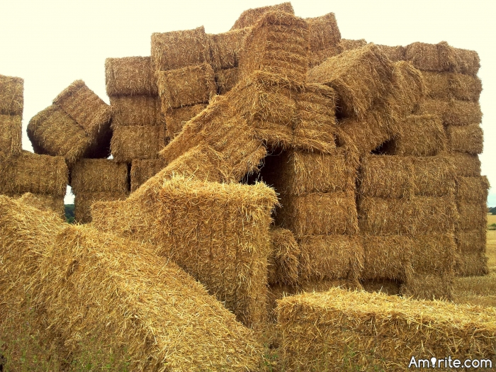 How many haystacks have you found in your life?