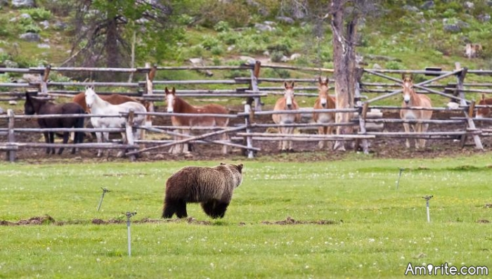 If a Grizzly bear visited your livestock corral for service (something to eat), would you turn him away based only on his outward appearance (hey, that looks like a Grizzly bear),  or invite him in, serve him,  and try to get to know him and find out about him?
