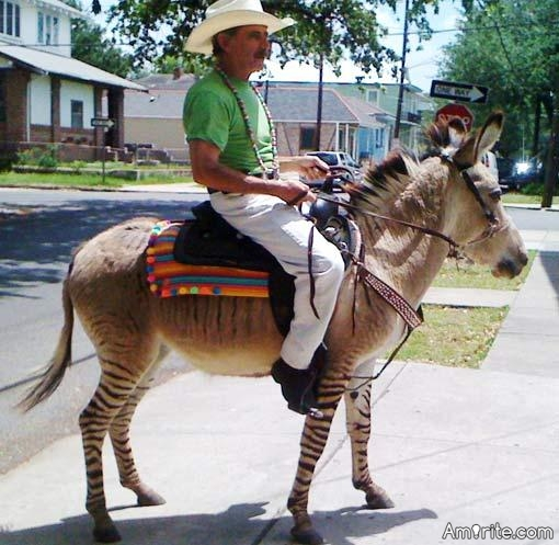 Have you ever felt like saddling up a zonkey and going for a ride?