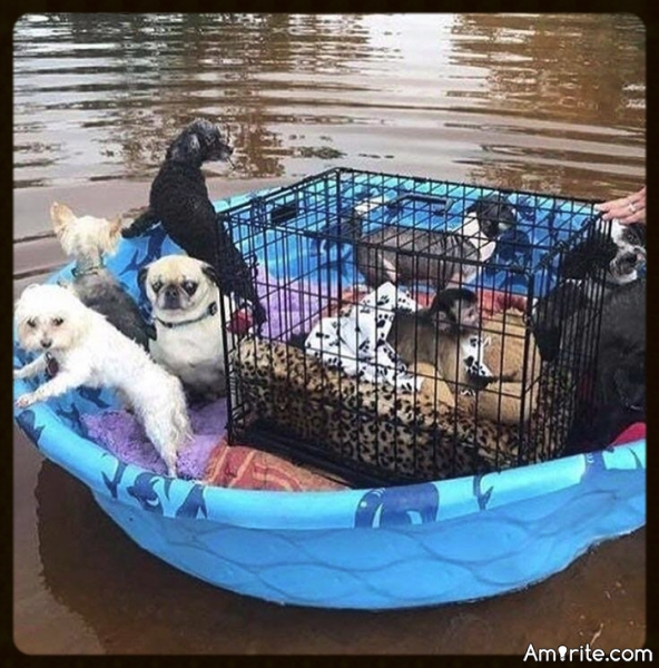 Good People Banding Together To Save Animals During Hurricane Harvey. MANY blessings to all those that are helping to save the animals.