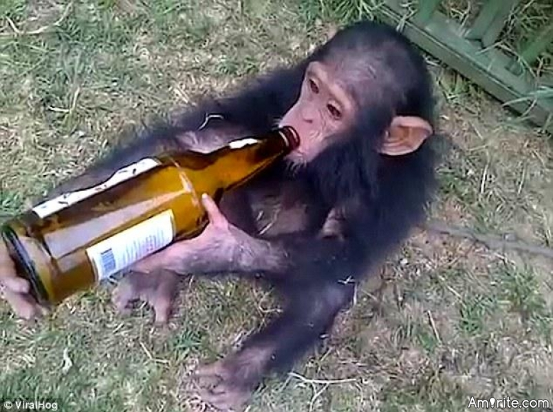 Using a monkey as a bottle opener is not always the best solution.