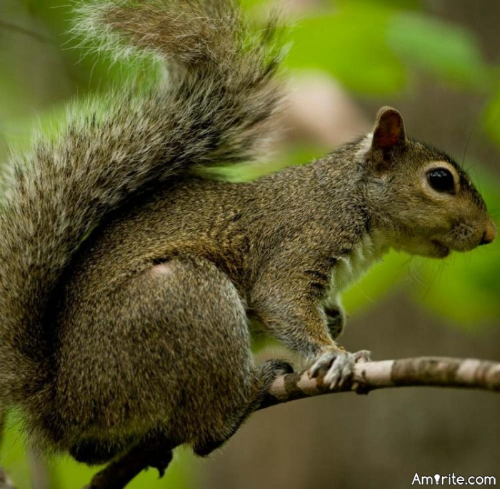 What do your pet squirrels like most about you?