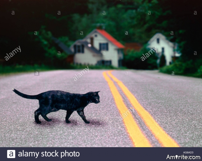 <b>What makes a cat think s/he can walk across a road?</b> <em>Whilst vehicles are screeching to a halt...</em>