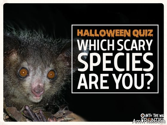 Quiz: Which Scary Species Are You?