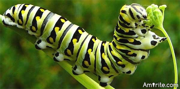 Are caterpillars insane?