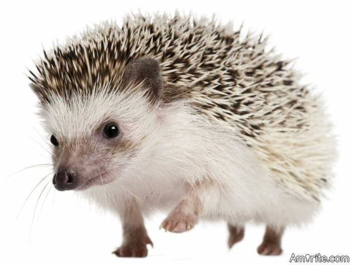 Have you ever fantasized about being a hedgehog?
