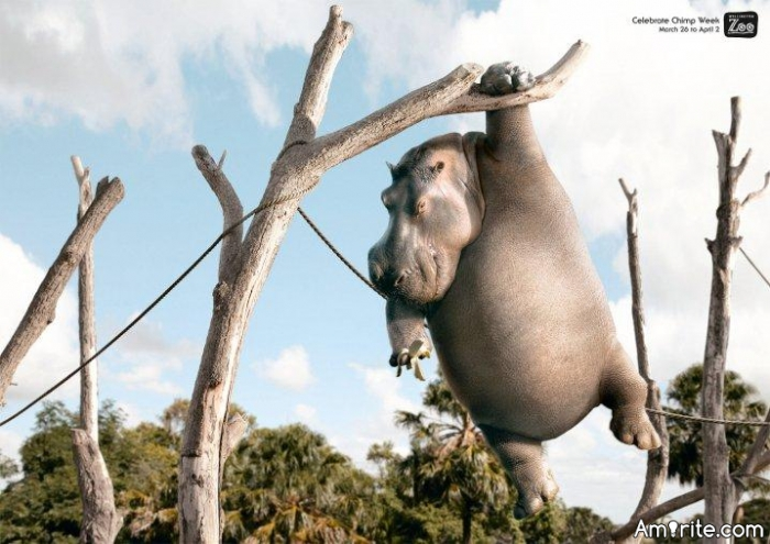 Why did the hippopotamus climb to the tree?