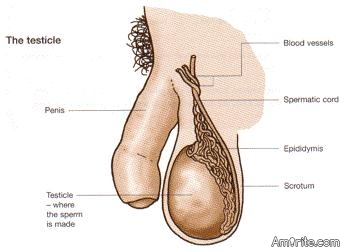 How many testicles do you have in your possession?