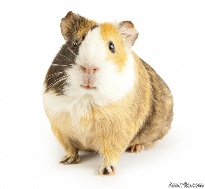 Are most of your gerbils happy today?