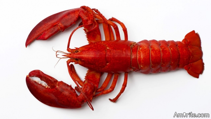 You gotta love **** lobsters.