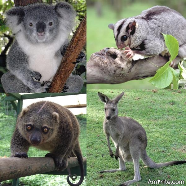 Are you scared of marsupials?