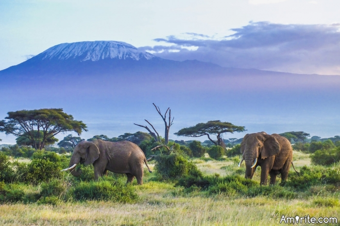 Is this a good way to save endangered  animals?