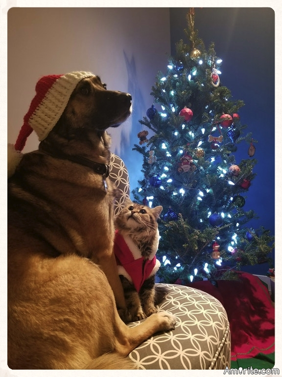 Merry Christmas to all the pets! Don't forget them...they need love too! xoxo