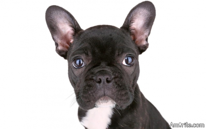 Do pets hate being left alone at home?  i will post link