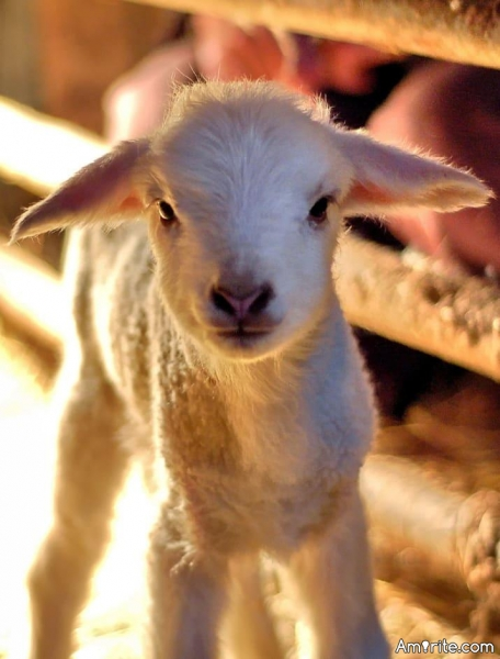 You can live as a cartoon character for a week.Which are you choosing?