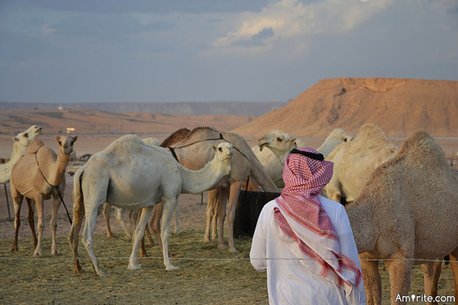 Now I've heard it all.  Cheating in a camel beauty contest!