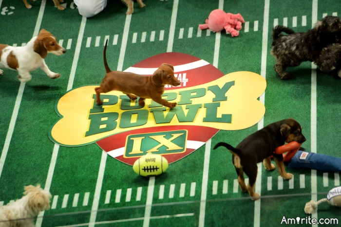 Do you ever watch The Puppy Bowl on Super Bowl Sunday?