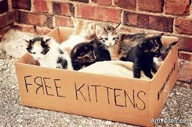 "Just saw a sign that said ""Free kittens""...that is just wonderful, no kitten should feel oppressed 🙄"