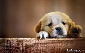 Where do puppy dogs go when their sad?