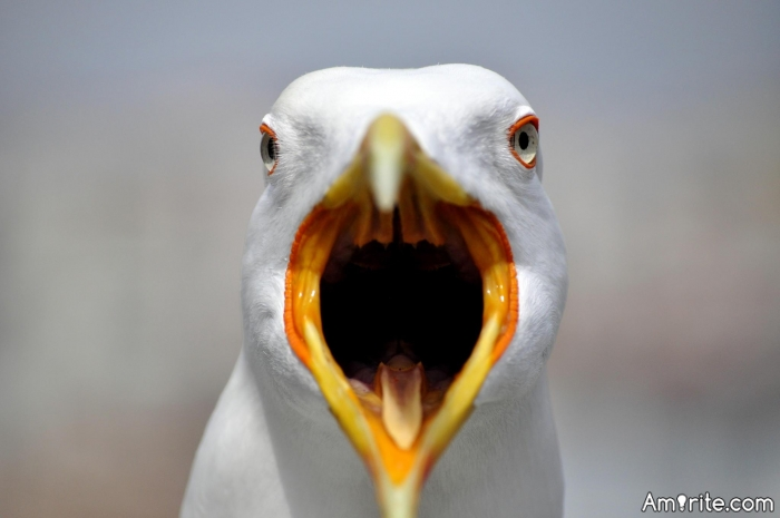 Seagulls are quite horrible.