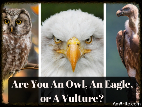 Quiz! Are You An Owl, An Eagle, or A Vulture?
