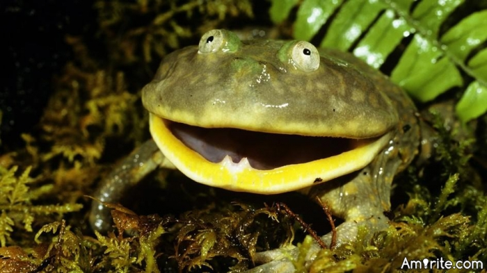 Is it just me, or do you also lol when someone with the face of a frog creates a post announcing the rules and qualifications that must be met before s/he will date and/or have se.x with you?