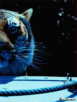 Have you seen Life of Pi? Thoughts?