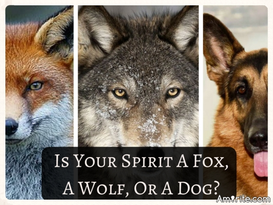 Quiz! Is Your Spirit A Fox, A Wolf, or a Dog?