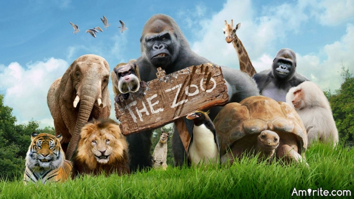 You've been to Zoos, <strong>right?</strong>