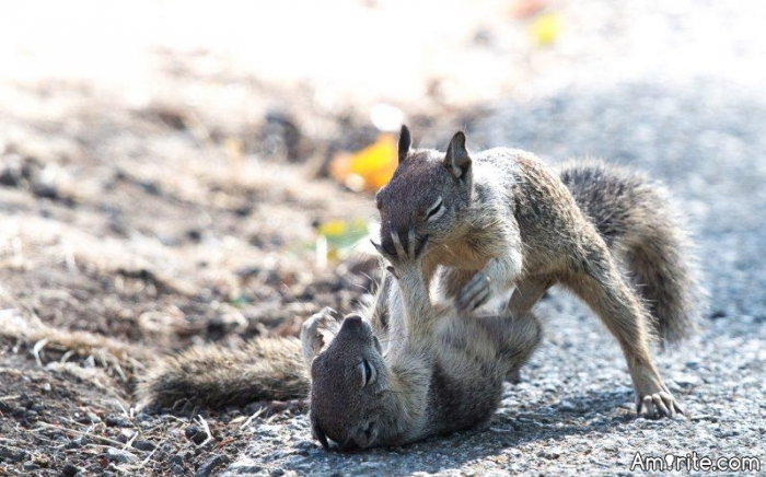 It's funny how people always seem to think, that squirrels are cute. I have seen two males fighting each other and it's not a pretty sight.