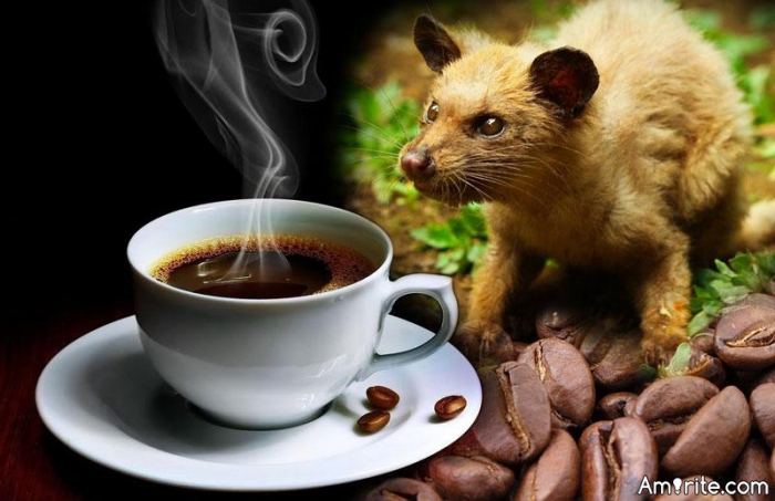 Weasel coffee has to be delicious.
