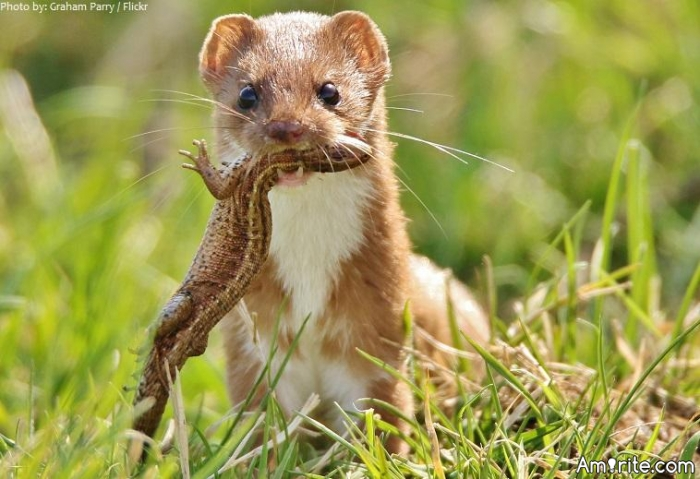 Why do all of the weasels hate you so badly?