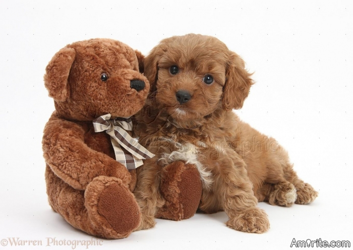 Which is cuter? Puppy Dogs or Teddy Bears?