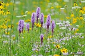 In summertime, a lady's fancy turns to wildflowers in a breezy field, not hatred.  Ladies don't hate.