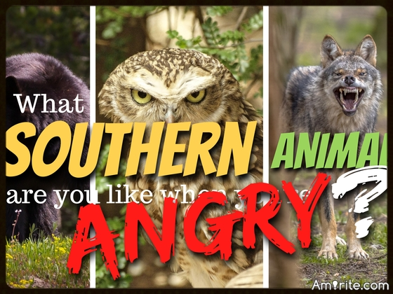 Quiz! What Southern Animal Are You Like When You're Angry?