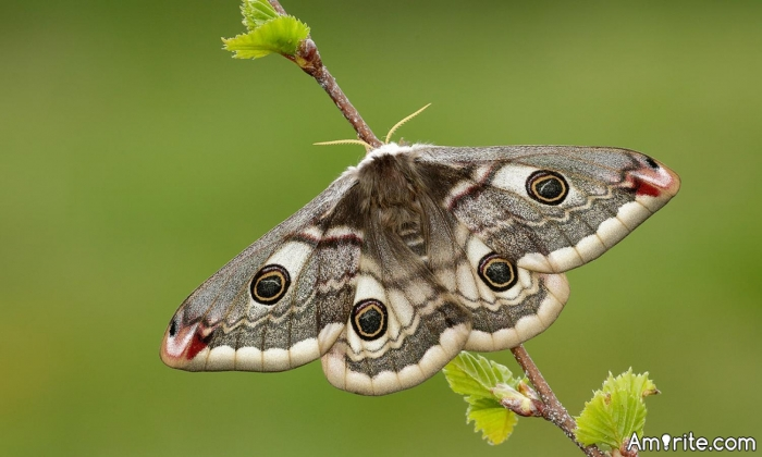 What is the reason, that causes most moths to hate us so much?